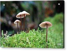 Fairy Bonnets Acrylic Print