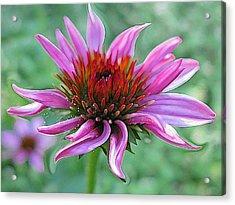 Fairy Dust Acrylic Print