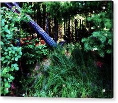 Acrylic Print featuring the photograph Fairy Forest by Jamie Lynn