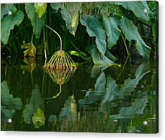 Fairy Pond Acrylic Print by Evelyn Tambour