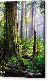 Fairy Tale Forest Acrylic Print by Inge Johnsson