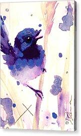 Fairy-wren Acrylic Print by Dawn Derman