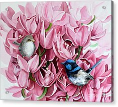 Fairy Wrens And Orchids Acrylic Print