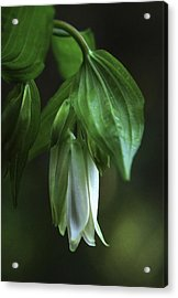 Acrylic Print featuring the photograph Fairybells Of The Forest by Betty Depee