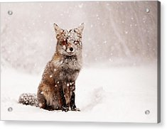 Fairytale Fox _ Red Fox In A Snow Storm Acrylic Print by Roeselien Raimond