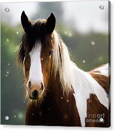 Fairytale Pony Acrylic Print