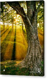 Faith And Hope Acrylic Print by Dan Carmichael