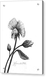 Faith Of A Flower Acrylic Print by J Ferwerda