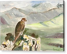 Falcon Acrylic Print by Christine Lathrop
