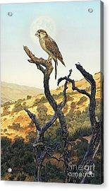 Falcon In The Sunset Acrylic Print by Stu Shepherd