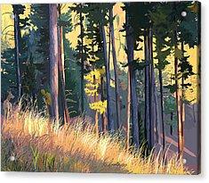 Fall Alpenglow Trees Grasses Acrylic Print