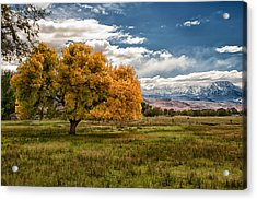 Fall And Winter Acrylic Print by Cat Connor