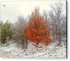 Fall And Winter Acrylic Print by Robert ONeil