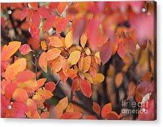 Fall Acrylic Print