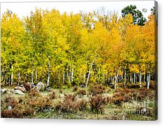 Fall Art Acrylic Print by Baywest Imaging