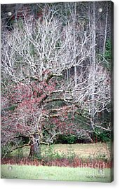 Fall At Cades Cove Acrylic Print