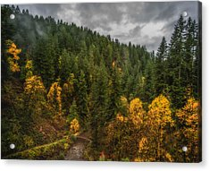 Acrylic Print featuring the photograph Fall At Silver Falls by Dennis Bucklin