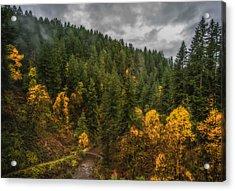 Fall At Silver Falls Acrylic Print by Dennis Bucklin
