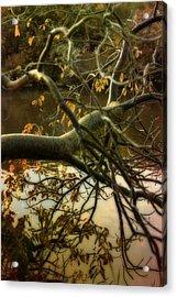 Fall At The Creek Acrylic Print by Ellen Heaverlo