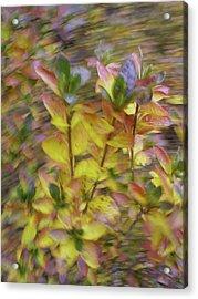 Autumn Azaleas 3 Acrylic Print