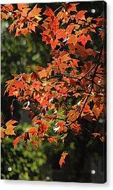 Autumn's Best Acrylic Print by Les Scarborough