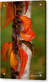 Fall Beauty Acrylic Print by Sharon Elliott