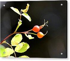 Fall Berries #3 Acrylic Print by Gina Gahagan