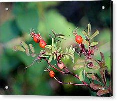 Fall Berries #4 Acrylic Print by Gina Gahagan