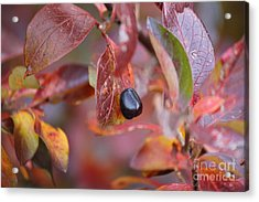 Fall Berry Acrylic Print