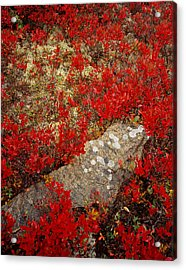 Fall Blueberries And Moss Acrylic Print