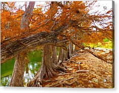 Fall Brilliance Acrylic Print by David  Norman