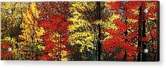Fall Canopy Acrylic Print
