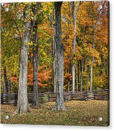 Acrylic Print featuring the photograph Fall Color #1 by Wendell Thompson