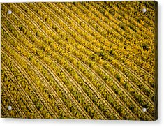 Fall Color Grape Vines Acrylic Print by Connie Cooper-Edwards