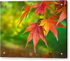 Fall Color Acrylic Print by Jeff Klingler