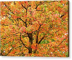 Fall Color Palette Acrylic Print by Judy Genovese