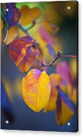 Acrylic Print featuring the photograph Fall Color by Stephen Anderson