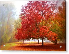 Fall Colored Trees Acrylic Print