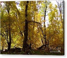 Fall Colors 6169 Acrylic Print