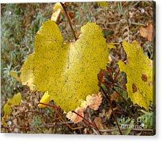 Fall Colors 6302 Acrylic Print