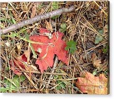 Fall Colors 6307 Acrylic Print