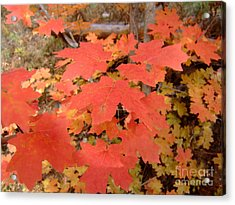 Fall Colors 6308 Acrylic Print