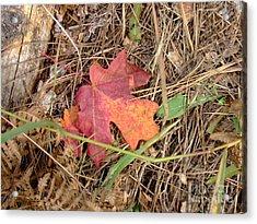 Fall Colors 6312 Acrylic Print