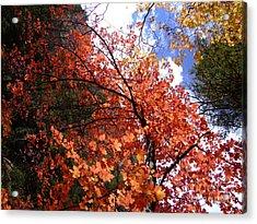 Fall Colors 6340 Acrylic Print