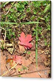 Fall Colors 6342 Acrylic Print