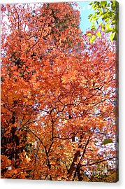 Fall Colors 6357 Acrylic Print