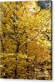 Fall Colors 6371 Acrylic Print