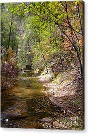 Fall Colors 6379 Acrylic Print