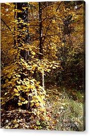 Fall Colors 6404 Acrylic Print