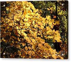 Fall Colors 6407 Acrylic Print
